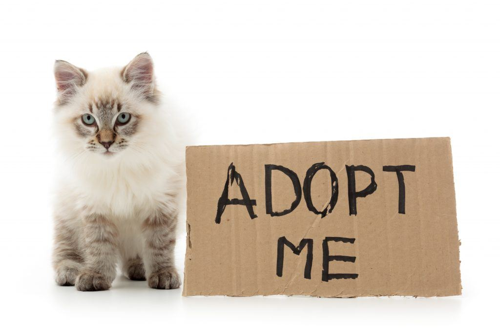 Cat with adopt me sign